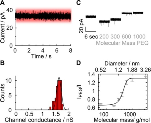 High-conductance state of membrane-embedded DNA nanopores at low voltages corresponds to an open pore as shown by PEG sizing. The traces were obtained with planar lipid bilayer recordings. The high conductance state is color-coded in red. (A) Representative ionic current trace at +20 mV. (B) Histogram of channel conductances obtained from measurements at +20 mV. (C) Current traces of individual pores in the absence and presence of PEG molecules of indicated mean molecular mass. (D) Pore blockade as a function of the hydrodynamic diameter of PEG. Between PEG 200 and PEG 600, there is a significant change in relative pore blockade. With PEG 1000 and above the effect is tapering off. This upper turning point indicates that PEG molecules are being excluded from the pore lumen. The hydrodynamic diameter of PEG 1000 (approximately 1.9 nm) is hence assumed to reflect the diameter of the DNA pore. The data present averages and the minima and maxima from five independent recordings (PEG 62 to PEG 400) and three independent recordings (PEG 600 to PEG 3350).