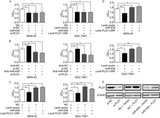 MiR-638 repressed GC cell proliferation by inhibiting PLD1. (A) PLD1 knockdown repressed MKN-45 and SGC-7901 cells growth, whereas upregulation of miR-638 in PLD1-depleted cells did not repress cell proliferation further. (B) MiR-638 silencing promoted cell growth, but did not promote cell proliferation in PLD1-depleted GC cells. (C) The upregulation of PLD1 ORF markedly promoted cell growth and abrogated miR-638-induced cell growth inhibition in MKN-45 and SGC-7901 cells. (D) MiR-638 overexpression promoted apoptosis, PLD1 overexpression repressed cell apoptosis and decreased the percentage of apoptotic cells after miR-638 overexpression. (E) The protein level of PLD1 was measured by Western blotting. Significant differences are indicated with * (*P < 0.05; **P < 0.01)