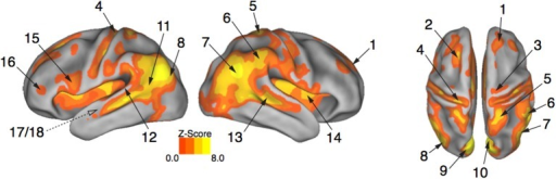 "Expressive performances engage the action observation network. Viewing expressive whole-body movement sequences engaged a distributed cortical action observation network (p < 0.05, FWE corrected). Large areas of parietal, temporal, frontal, and insular cortex included somatosensory, motor, and premotor regions that have been considered previously to comprise a human ""mirror neuron"" system, as well as non-motor areas linked to comprehension, social perception, and affective decision-making. Number labels correspond to those listed in Table 2, which provides anatomical names and voxel coordinates for areas of peak activation. Dotted line for regions 17/18 indicates medial temporal position not visible on the cortical surface."