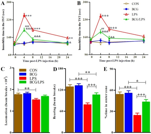 Neonatal BCG vaccination alleviates LPS-induced depression and anxiety-like behavior in adulthood. The mice were subjected to the FST and TST tasks 30 min prior to LPS injection and 4, 8, and 24 h later. The bars represent the mean immobility time spent in the (A) FST and (B) TST tasks. The data were analyzed using three-way (BCGxLPSxtime) repeated measures ANOVA followed by Bonferroni post-hoc test. The mice were subjected to the OFT task 2.5 h subsequent to LPS injection. The bars represent the mean (C) locomotor activities, (D) rearing activities and the (E) proportion of center zone activities by mice during the 30-min test. For each of the three behavior tests, a new set of animals were used to avoid possible disturbances. The data represent the mean ± SE (n=16) and were analyzed using two-way ANOVA followed by Bonferroni post-hoc test. The symbols '*', '#' and '&' indicate significant differences compared with the CON mice, BCG group and LPS group, respectively. The single, double and triple symbols indicate P<0.05, P<0.01 and P<0.001, respectively (post-hoc differences). The experiment was repeated twice with similar results. BCG, Bacillus Calmette-Guérin; LPS, lipopolysaccharide; FST, forced swimming test; TST, tail suspension test; ANOVA, analysis of variance; OFT, open field test; SE, standard error; CON, control.