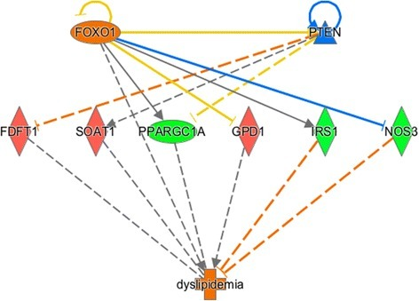 The network of the upstream regulator FOXO1 by IPA®. Genes presented in red are up-regulated in the high oleic acid content (H) group. Genes presented in green are down-regulated in the H group. The intensity of the colors is related to the estimated of the fold change. The interrupted lines in orange represents direct inhibition. The blue represents direct activation. The gray lines represent the no interactions have been reported in the literature