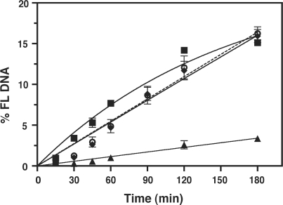 Effect of zinc coordinating activity of NC on the kinetics of 591R primer extension. Reactions were performed with RT in the presence or absence of WT NC, SSHS NC (32), or zinc-less NC (69). The data were plotted as % FL DNA versus Time (min). Symbols: minus NC, squares; WT NC, triangles; SSHS NC, open circles, dashed line; zinc-less NC, diamonds. Note that the minus NC and WT NC curves are the same as those shown in Figure 5 for reactions with WT RT, but the scale on the y-axis is expanded here.