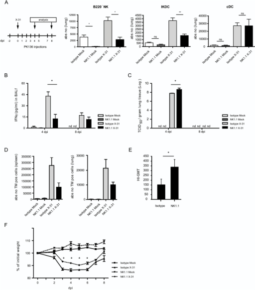 Depletion of NK1.1+ cells during in vivo influenza virus infection affects infection parameters.(A) 2 days after injection of PK136 (NK1.1 depleting antibody), mice were infected with X31 virus. Two days later, depletion of NK subsets and cDCs was checked in lung tissue by using the gating strategy in Figure 1. (B) IFN-γ was measured in BALf of infected mice versus mock-infected mice with or without NK1.1+ cell depletion. Bars represent mean values of IFN-γ +/− SEM. At least 5 mice per group were used, * p<0,05. (C) Viral titers were measured in lung tissue of at least 5 mice per group and expressed as mean TCID50 +/− SEM. * p<0,05. (D) Absolute numbers of TM specific CD8+ T cells were measured in spleen and lung tissue at 8 dpi and represented as mean values +/− SEM, of at least 5 mice/group. (E) Hemagluttinin specific antibodies in serum were measured at 8 dpi and depicted as geometric mean titer +/− SE. * p<0,05. (F) Weight loss of mice during infection depicted as % of initial weight. Values indicate mean of at least 5 mice per group +/− SEM.*p<0,05. The demonstrated data are representative of 4 independently performed experiments.