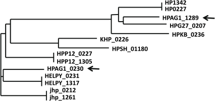 The phylogenic tree of repeats HP0227 and HP1342 with their homologs in different genomes.The arrows indicate the homologs in strain HPAG1.