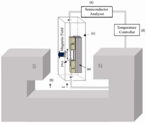 Two electrodes L and R (L = left, R = right) with an insulator gap in the gold-DNA-gold structure in the presence of external magnetic field is placed inside cryostat connected to temperature controller, semiconductor analyzer. (a) MDM; (b) Electromagnet; (c) Cryostat; (d) Temperature controller; (e) Semiconductor analyzer.