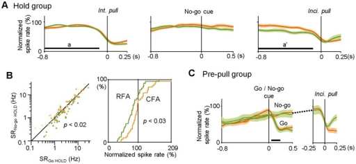 Large reduction in Hold-type activity by an extension of the hold period in RFA-RS neurons.A) Populational changes in normalized spike rate in the Hold-type groups (significant in Go trials) of CFA-RS (orange) and RFA-RS (green) neurons [mean ± s.e.m. traces, aligned with the onset (0 s) of intentional pull in Go trials (left), No-go cue (middle), and incidental pull (right) in No-go trials]. Horizontal bars (a and a') correspond to the time windows shown in Fig. 5C. Note that the Hold-type activity of RFA-RS was lower than that of CFA-RS neurons in the No-go trials (a'), and also that no change was observed in response to the No-go cue presentation. B) Left: averaged spike rates of Hold-type activity (significant in Go trials) before intentional pull (SRGo HOLD, corresponding to Fig. 5C, a) and before incidental pull (SRNo-go HOLD, corresponding to a') for individual CFA-RS (orange, filled triangles) and RFA-RS neurons (green). Open triangles represent those with statistical significance only in No-go trials (corresponding to Fig. 5C, c' and c). Right: cumulative probability analysis of the distribution of normalized spike rates during an extended hold period in No-go trials (a') in CFA-RS and RFA-RS neurons. There was a larger reduction in the Hold-type activity in RFA-RS neurons in the extended period than that in CFA-RS neurons. C) Populational changes in normalized spike rate in Pre-pull-type groups of CFA-RS (orange; as indicated by an asterisk in Fig. 5C) and RFA-RS (green) neurons [mean ± s.e.m. traces, aligned with the onset (0 s) of Go or No-go cue (left, for Go and No-go trials, respectively) and incidental pull (right, for No-go trials)]. A horizontal bar indicates a range of intentional pulls. These types of neurons abruptly stopped a gradually increasing spike activity just prior to intentional/incidental pull movements.