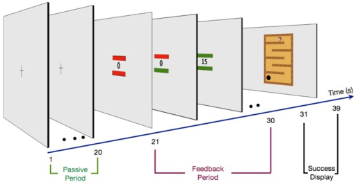 The neurofeedback design. Neurofeedback training: during the passive period (20 s) volunteers fixated the central cross. This period was used to assess an actual baseline value of alpha or gamma current density power in the ROIs. In the feedback period (second 21–30) participants tried to increase the current density power in the ROIs (value at fixation) and at the same time avoid EOG (bar above value) and EMG (electromyography) (bar below value) artifacts by keeping the bars green. As an artifact occurred (at least one of the bars red) the presented value was set to zero. The success of the intentionally increased artifact free gamma or alpha values was presented after the feedback period (success display).