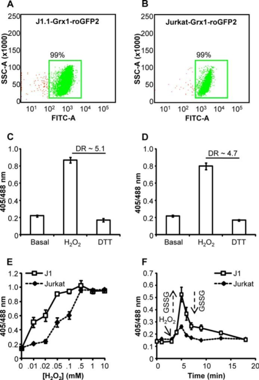 Generation Of J11 And Jurkat Cells Stably Expressing T Open I