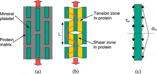 Models of biocomposites. (a) Perfectly staggered mineral inclusions embedded in protein matrix. (b) A tension–shear chain model of biocomposites in which the tensile regions of protein are eliminated to emphasize the load transfer within the composite structure. (c) The free body diagram of a mineral crystal.
