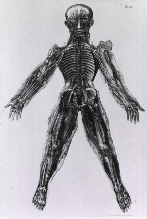 <p>A transparent human figure illustrating the internal structure of the body.</p>