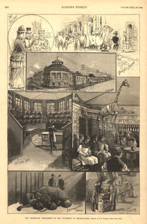 <p>Seven different scenes of veterinary classes and an exterior view of the school.</p>