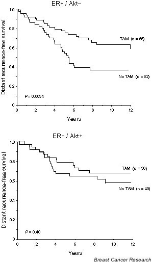 Distant recurrence-free survival for oestrogen receptor (ER)-positive patients treated with tamoxifen (TAM) or not (no TAM) in relation to Akt status.
