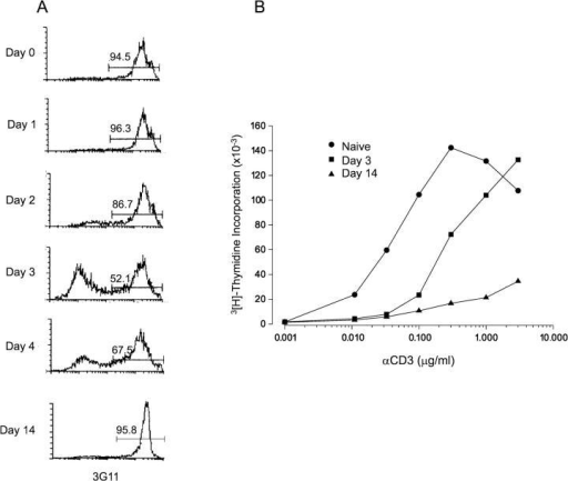 Functional characterization of CD4+ Vβ8.1 lymphocytes. FACS® analysis was performed to determine the percentage of 3G11 expressing CD4+ cells on indicated days after inoculation. (A) The percentage of 3G11+ lymph node lymphocytes decreases during the first few days after Mls-1a superantigen inoculation and maximum steady-state number and percentage (∼50%) of 3G11− cells is observed on day 3 after antigen inoculation, after which the proportion of CD4+ 3G11− cells progressively decreases. (B) CD4+ lymph node lymphocytes from control Vβ8.1 TCR transgenic mice or from mice stimulated with Mls-superantigen in vivo were restimulated with soluble αCD3 mAb (145–2C11) and splenic APC's in vitro. Proliferation was assessed by measuring the amount of [3H]thymidine (counts per minute) incorporation on day 4 of culture for naive and cells previously primed in vivo for 3 (▪) or 14 (▴) days. The proliferative capacity of day 14 lymphocytes was markedly decreased. Each value is the mean (±SD) of triplicate cultures and the experiment shown is typical of three similar experiments.