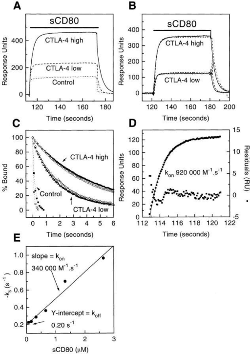 Estimating the kon and koff for sCD80 binding CTLA-4 Ig.  (A) Example of primary data. sCD80 (265 nM) was injected (solid bar) at  40 μl/min through FCs with nothing immobilized (Control) or CTLA-4  immobilized at low (920 RUs) or high (2500 RUs) levels. (B) Effect of  varying the flow rate. sCD80 (265 nM) was injected (solid bar) at 20 (solid  line) or 40 (stippled line) μl/min through FCs with high or low levels of  CTLA-4. Background responses (following injection through a control  FC) have been subtracted. (C) Dissociation of sCD80 from FC with high  (•, ○) or low (▴, ▵) levels of CTLA-4 Ig at flow rate of 20 (•, ▴, ▪)  or 40 (○, ▵, □) μl/min. Also shown is the fall in response in the same  period following injection of sCD80 through control FC (▪, □). The  data fitted reasonably well to single exponential decay curves (dotted lines),  yielding the following t1/2 values: •, 4.8 s; ○, 4.4 s; ▴, 2.2 s; ▵, 2.35 s;  ▪, 0.16 s; □, 0.075 s. (D) Estimating the kon. Equation 1 (see Materials  and Methods) was fitted (solid line) to data (•) from (B) (corresponding to  binding of sCD80 to CTLA-4 [low level] at 40 μl/min), yielding the indicated residuals (▪) and kon. (E) Independent estimation of kon and koff by  analysis of binding at different sCD80 concentrations. The rate at which  the binding rate decreases (−ks) during the injection phase was determined for a range of injected sCD80 concentrations (see Materials and  Methods [43]) using data from Fig. 2 A. A linear regression fit of equation  2 to a plot of ks versus sCD80 concentration yielded the kon and koff values.
