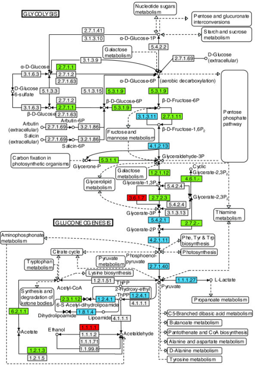 Metabolic Pathway Coverage Glycolysisgluconeogenesis Open I
