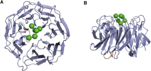 EPTP ligand bindind site.Top (A) and lateral (B) view of the hypothetical peptide binding site on the EPTP model. The position of a hypothetical peptide (green spheres) was obtained by superimposition of the EPTP model with the WDR5 structure (PDB code 3EMH). Note that the insertion specific for LGI1 ( in yellow) maps on the bottom face of the domain.