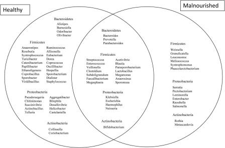Venn Diagram Showing The Distribution Of Genera Belongi Open I
