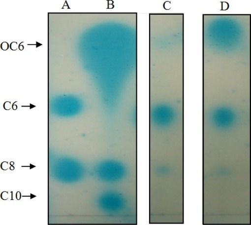TLC analysis of AHL production by oral K. pneumoniae strains. Arrows indicate the positions of AHL standards run on the same plate. Lane A: C6-HSL (C6) and C8-HSL (C8). Lane B: 3-oxo-C6-HSL (OC6), C8-HSL (C8), and C10-HSL (C10). Lanes C and D: Extracts of spent culture supernatants from T2-1-1 and T2-1-2, respectively.