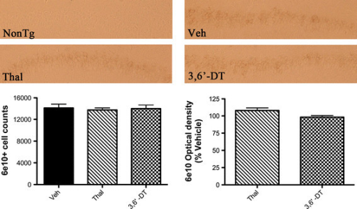 Amyloid precursor protein/amyloid beta peptide staining is not changed in 3 × Tg mice by 3,6′-dithiothalidomide or thalidomide treatment. 6E10 immunohistochemistry was stereologically analyzed in the hippocampal CA1 to CA2 regions (left graph; n = 5 to 6 mice per treatment). There were no statistically significant differences in 6E10+ cell counts between treatment groups. Representative photomicrographs of each treatment group are shown. The same regions were also analyzed for optical density (right graph) and show that there were no differences between treatment groups.