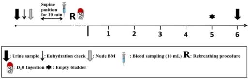 Schematic representation of procedures during experimental trials.