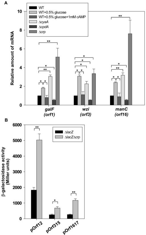 Glucose and CCR proteins affect cps transcription.(A) qRT-PCR analyses of the expression of the K2 cps genes (orf1, orf3, and orf16) for WT, ΔcyaA, ΔcpdA, and Δcrp strains in LB or indicated LB medium. (B) β-galactosidase activities of K. pneumoniae CG43S3ΔlacZ and the isogenic strain (ΔlacZΔcrp) carrying the reporter plasmid pOrf12 (Porf1-2::lacZ), pOrf315 (Porf3-15::lacZ), or pOrf1617 (Porf16-17::lacZ) were determined using log-phase cultures grown in LB medium. The results shown are an average from triplicate measurements in one single experiment representative of three independent experiments. Error bars indicate standard deviations. *P<0.05 and **P<0.01 compared to the indicated group.