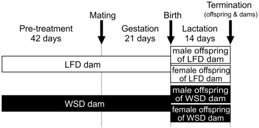 Study design.C57BL/6 dams received either a low fat control diet (LFD) or a Western-style high fat diet (WSD) throughout the study. The treatment started six weeks before mating and continued during gestation and lactation. Dams and offspring were sacrificed at postnatal week two. Male and female offspring were included into further analysis: male offspring from maternal LFD (n = 6), male offspring from maternal WSD (n = 6), female offspring from maternal LFD (n = 9), female offspring from maternal WSD (n = 6).