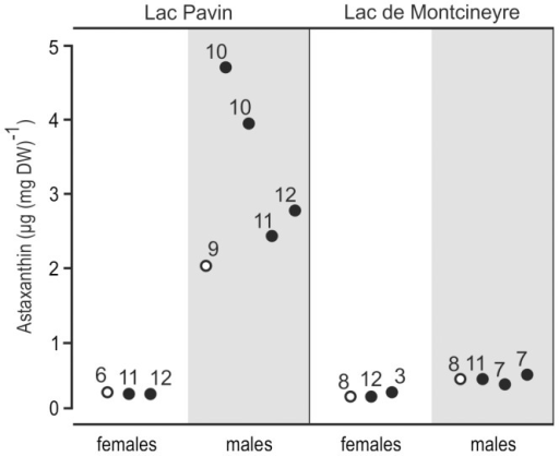 Changes of carotenoid content in A. denticornis.Empty circles refer to negative controls; black circles refer to UV exposed animals. Numbers above each point correspond to the number of animals in the respective batch of ethanol extract. A rise in astaxanthin content was only observed in LP males. In both populations males had higher concentrations of astaxanthin than females.