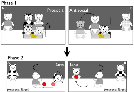 "Stimuli. Depictions of Prosocial/Antisocial puppet shows during Phase 1 and Giving/Taking puppet shows during Phase 2 of Experiment 1 (example of the Antisocial Target condition). Phase 1 (A) Prosocial Box Events. The Cow enters the stage and tries but fails to open the box. The Prosocial Pig helps him open it. The Cow lies down on top of the toy inside the box, and the Prosocial Pig runs offstage. Phase 1 (B) Antisocial Box Events. The Cow enters the stage and tries but fails to open the box. The Antisocial Pig jumps on top of the box, slamming it shut. The Cow lies down next to the box without the toy, and the Antisocial Pig runs offstage. Phase 2 (A) Giving Ball Events. The Antisocial Pig from Phase 1 enters the stage, and picks up a ball resting in the center. The Pig drops and catches the ball several times, and then drops the ball toward the Giver Tiger. The Pig turns to ""ask"" for the ball back, and the Giver rolls the ball back to him and runs offstage. Phase 2 (B): taking Ball Events. The Antisocial Pig enters and plays with the ball as in Giving Events. He then drops the ball toward the Taker Tiger, and asks for it back as in Giving Events. The Taker Tiger runs offstage, stealing the ball away."