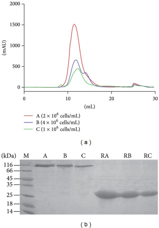 Comparison of two methods used for testing protein expression from different cell densities. (a): Test protein expression level by gel filtration chromatography method different cell densities expression level (from high to low: A, 2 × 106 cells/mL; B, 4 × 106 cells/mL; C, 1 × 106 cells/mL). (b): Test protein expression level by SDS-PAGE method from different cell densities (lane A, 2 × 106 cells/mL; lane B, 4 × 106 cells/mL; lane C, 1 × 106 cells/mL. RA, RB, and RC indicated reduced stated of Ac-AChBP expression samples, respectively, from lanes A, B, and C), the result of test expression level method analysis was the same as gel filtration chromatography.