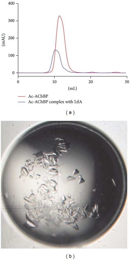 Gel filtration chromatography and crystals of Ac-AChBP complex with α-conotoxin LtIA. (a) Comparison of Ac-AChBP (red line) and Ac-AChBP/LtIA (blue line) complex by gel filtration chromatography. (b) The crystals of co-crystallized receptor Ac-AChBP with its ligand α-conotoxin LtIA from Conus litteratus.