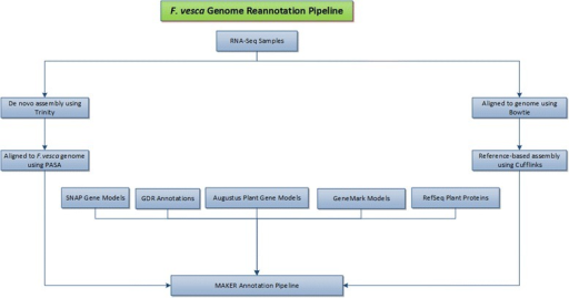 Summary of overall bioinformatics pipeline forF. vescagenome re-annotation. Evidence data including de novo assembled transcripts from all 50 samples, reference-guided assembled transcripts from all 50 samples, gene models generated using ab initio algorithm based tools (Augustus, SNAP and GeneMark), the first generation F. vesca gene predictions and plant reference proteins were passed to the MAKER pipeline to generate TowU_Fve annotation.