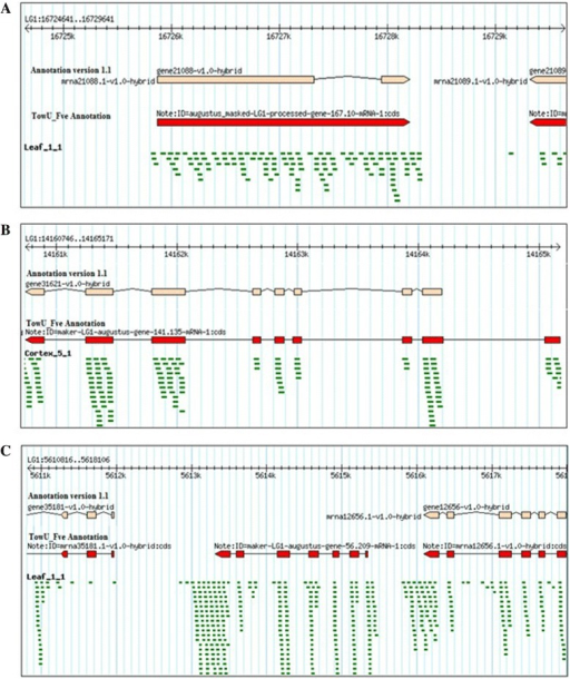 Comparisons of version 1.1 annotation with the TowU_Fve annotation. (A) The version1.1 (peach color) annotation shows two exons connected by an intron. However, leaf RNASeq reads align to the intronic region. The TowU_Fve annotation (red) merges two existing exons by including the intronic region. (B) The version1.1 (peach color) annotation is missing the last exon revealed by cortex tissue RNASeq reads alignments. The TowU_Fve annotation (red) shows the newly predicted gene structure with the addition of the distal exon. (C) The first generation annotation (peach color) shows an absence of a gene between 5613k and 5616k, while the aligned reads from leaf tissue revealed the existence of an expressed gene at that site. The TowU_Fve annotation (red) shows a newly predicted gene (an alpha/beta-hydrolase domain-containing protein) between gene35181 and gene12565.