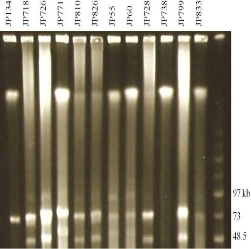 PFGE analyses of plasmids from canine and equine C. perfringens strains.Agarose plugs containing DNA from each specified isolate were digested with NotI and subjected to PFGE and staining with ethidium bromide. Line numbers indicate isolate numbers; M: Mid-Range II PFG molecular DNA ladder (Kb).