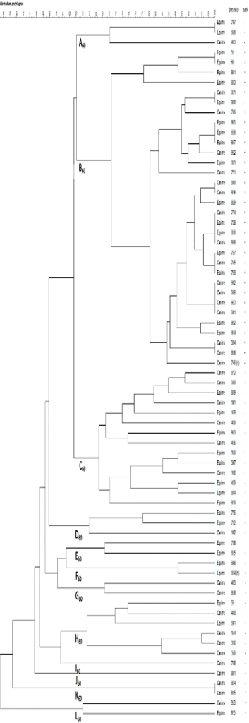 Dendogram of Clostridium perfringens isolates.Dendogram of C.perfringens isolates typed by pulsed-field gel electrophoresis and analysed using BioNumerics software. The BioNumerics software used was version 7.1 from Applied Maths, Austin, TX.