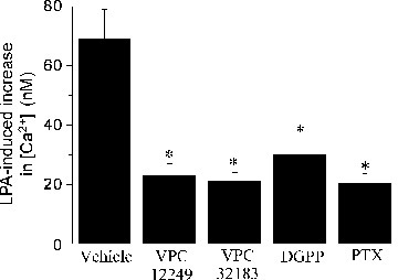 Effect of lysophosphatidic acid receptor antagonists and Gi protein inhibitor on LPA-induced changes in intracellular Ca2+ concentration in C2C12 cells. C2C12 cells were pre-treated with 10 μM of the LPA receptor antagonists, VPC 12249, VPC 32183 and DGPP (8.0), for 10 sec or with pertussis toxin (PTX, 100 ng/ml), a Gi protein inhibitor, for 10 min prior to the addition of LPA (10 μM). The [Ca2+]i was measured as described in the Materials and methods. Values are means ± S.E.M. of six different experiments. *P < 0.05 versus vehicle control value. DGPP: dioctanoyl glycerol pyrophosphate; LPA : lysophosphatidic acid, [Ca2+]i: intracellular calcium concentration.