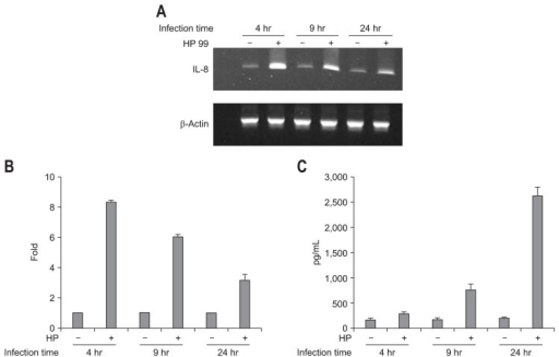 Interleukin (IL)-8 mRNA expression and IL-8 production in AGS cells infected with cytotoxin-associated gene pathogenicity island (cagPAI) (+) Helicobacter pylori (HP99). (A) As assayed by qualitative reverse transcription-polymerase chain reaction (RT-PCR), the incubation of AGS cells with HP99 resulted in increased IL-8 mRNA expression compared with that in controls by 24 hours after infection. (B) IL-8 mRNA expression in response to infection with HP99 was significantly increased at 4 hours after infection, as determined by real-time RT-PCR. (C) As determined by enzyme-linked immunosorbent assay, infected cells produced IL-8 at a mean level in excess of 500 pg/mL. The error bars indicate the standard error of the mean of triplicate samples, which were representative of three independent experiments.