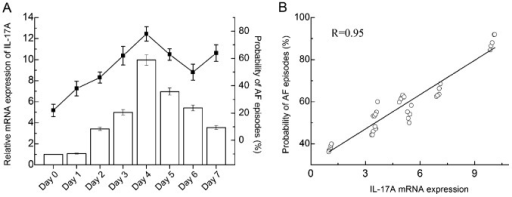 Inducibility of interleukin-17A (IL-17A) mRNA expression and atrial fibrillation (AF) in rats with sterile pericarditis (SP). (A) IL-17A mRNA expression and probability of developing AF during post-operative days 0–7. The time of the probability of developing AF coincided with the expression of IL-17A in the rats with SP. (B) Correlation between IL-17A expression and the probability of developing AF.