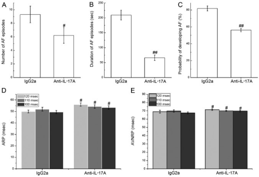 Effect of the neutralization of endogenous interleukin-17A (IL-17A) on the development of atrial fibrillation (AF) at 4 days after surgery in the rats with sterile pericarditis (SP). (A) Number of AF episodes. (B) Duration of AF episodes. (C) Probability of developing AF. (D) Atrial nodal refractory period (ARP). (E) Atrioventricular (AV) nodal refractory period (AVNRP). #P<0.05 and ##P<0.01 vs. IgG2a control group.