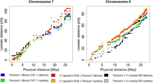 Physical position (PN40024 12X.2) vs genetic distances in six independent maps for chromosomes 7 (A) and 8 (B) of 'Horizon'.Genetic maps were generated with both synteny and de novo pipelines from three independent F1 families: V. rupestris B38 x 'Horizon', 'Horizon' x V. cinerea B9 and 'Horizon' x Illinois 547–1.