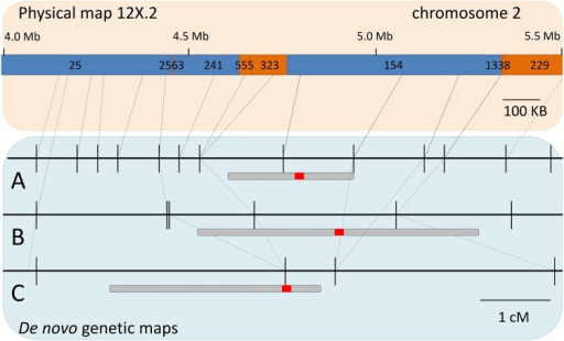 "Localization of the flower sex locus using de novo maps from three families.The PN40024 version 12X.2 reference surrounding the sex locus is shown. Numbers above blue and orange sections indicate scaffold id. Blue scaffolds were located in chromosome 2 and orange scaffolds were located in ""unknown"" chromosomes in the previous version 12X.0 of PN40024. Connecting lines indicate physical position for SNPs in three de novo maps: A) 'Horizon' x Illinois 547–1, B) 'Horizon' x V. cinerea B9, and C) 'Chardonnay' x V. cinerea B9. For each map, localization of flower sex locus is shown. Shaded areas indicating 1.8 LOD confidence intervals and solid red areas indicate position of the maximum LOD."