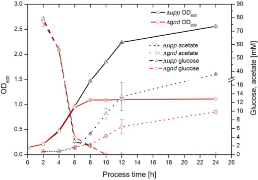 Growth (full lines) of Δupp (Δ, black) and Δgnd (o, red) strains. Glucose (dashed lines) and acetate (dotted lines) concentration in supernatant at a sequentially sampled cultivation.