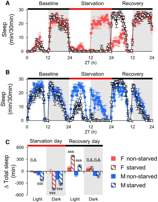 Suppression of sleep by starvation generates rebound sleep in populations. Sleep patterns generated by starvation in female (A) and male (B) flies in populations. C, Total daytime and nighttime sleep changes are plotted as mean ± SEM. Male flies' sleep was reduced significantly during the day and night, but female flies' sleep was significantly suppressed only in the night. Red bar indicates the starvation period. Twenty-four hour starvation-induced sleep loss was compensated after feeding on the recovery day. Δ Total sleep: total sleep changes. n = 8 for all conditions. ***p < 0.0001; n.s., no significant difference. ZT, Zeitgeber time; F, female; M, male.