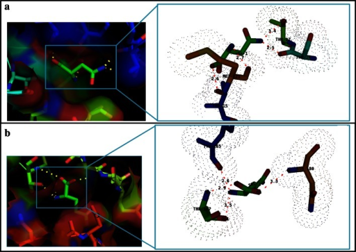 Molecular docking results of Erwinaze® with ligand substrates a binding with l-Asn, b binding with l-Gln