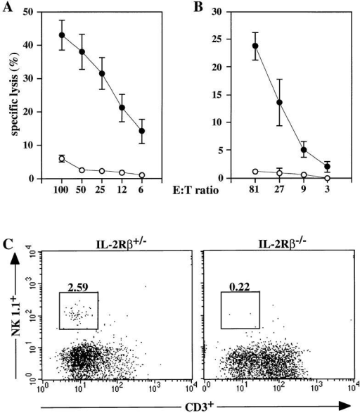 NK cell cytolytic activity and development in IL-2Rβ–deficient mice. Top panels show lysis of YAC-1 target cells by (A) spleen  MNC from poly(I):(C )–treated animals or (B) spleen MNC incubated in  vitro with IL-12. IL-2Rβ+/− MNC are represented by closed symbols;  IL-2Rβ−/− MNC are represented by open symbols. Data are shown as  mean ± SEM for (A) five IL-2Rβ+/− and five IL-2Rβ/- mice and for  (B) four IL-2Rβ+/− and two IL-2Rβ−/− mice, analyzed in two separate  experiments. (C) Flow cytometric analysis of NK1.1 and CD3 expression  on NK cells in IL-2Rβ–deficient mice. PB cells from IL-2Rβ+/− and IL2Rβ−/− mice were stained with anti-NK1.1 and anti-CD3, and 10,000  viable lymphocytes were gated. Numbers represent the percentage of  NK1.1+ cells in the gated population for a representative individual from  each group.