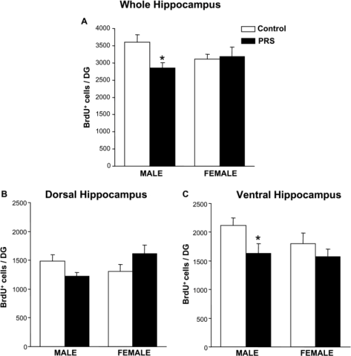 Gender effect of PRS on the survival of newly-formed cells in the hippocampal dentate gyrus.Data obtained in the whole hippocampus and in the dorsal and ventral hippocampus are shown in (A), (B), and (C), respectively. In the whole hippocampus the outcome of PRS was gender-dependent (ANOVA group×sex interaction: F (1,16) = 4.53, p<0.05;). Values are means±S.E.M. of 5 measurements. * p<0.05 for PRS vs control males, ANOVA+Newman-Keul's post-hoc test
