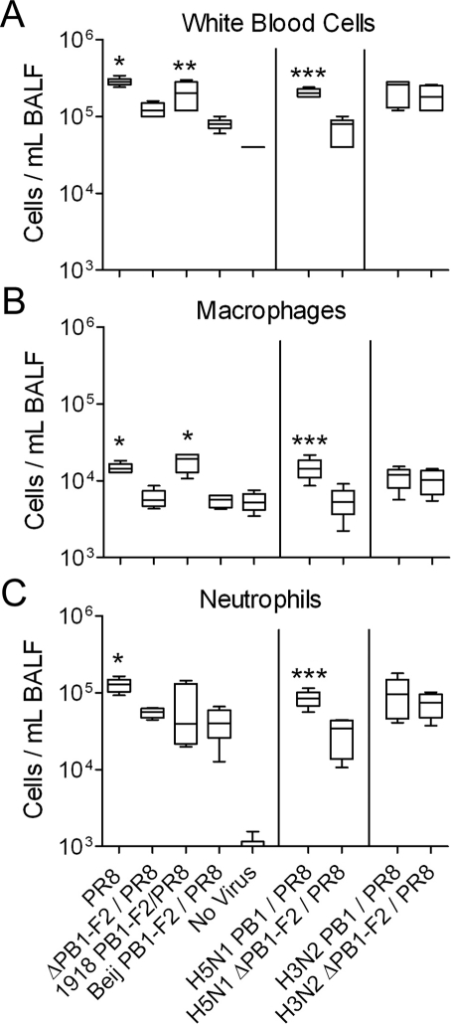 PB1-F2 enhances viral-mediated lung inflammation.Groups of mice were infected with a panel of viruses (see methods for definitions) and euthanized 72 hours post-infection. BAL fluid from the animals was assayed by flow-cytometry [10] for the mean number of A) white blood cells, B) macrophages, and C) neutrophils compared to uninfected mice or mice infected with a virus lacking the ability to express PB1-F2. An asterisk (*) indicates a significant difference compared to animals infected with the ΔPB1-F2/PR8 or Beij PB1-F2/PR8 viruses, and uninfected control animals by ANOVA (p<0.05). A double asterisk (**) indicates a significant difference compared to animals infected with the Beij PB1-F2/PR8 virus and uninfected control animals. A triple asterisk (***) indicates a significant difference compared to animals infected with the H5N1 ΔPB1-F2/PR8 virus and uninfected control animals. Error bars indicate the standard deviation from the mean.