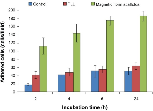 Quantitative analysis of the NOM cells adhered to the magnetic fibrin scaffold coating, or PLL coating, or uncoated culture plate (control) at different time intervals post-seeding. NOM cells were seeded in 24-well culture plates coated with the magnetic fibrin hydrogel or with PLL, or uncoated wells. 2, 4, 6, and 24 h after the seeding the wells were rinsed with the culture medium to remove the non-adherent cells. Quantification of the number of the adherent cells was performed by phase-contrast microscope images of five random non-overlapping fields of each well. Cells were then counted using ImageJ software, and the average and the standard deviation were calculated.Abbreviations: NOM, nasal olfactory mucosa; PLL, poly-L-lysine.