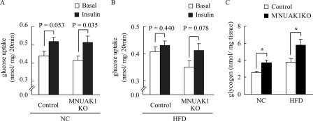 MNUAK1KO mice show improved insulin sensitivity and increased glycogen storage in skeletal muscle.A and B, rate of glucose uptake in soleus muscles isolated from 18–20-week-old control and MNUAK1KO mice fed a NC (A) or a HFD (B) without or with insulin stimulation. The data are the means ± S.E. (n = 7 for NC and 8 for HFD). C, glycogen concentration in the soleus muscle of 13–15-week-old control and MNUAK1KO mice fed a NC or HFD. The data are the means ± S.E. (n = 8). *, p < 0.05 (Student's t test).