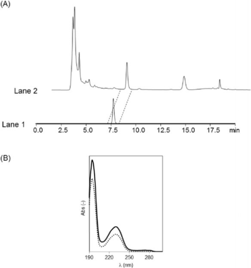 (A) HPLC traces of benzoic acid analysis. Lane 1: Standard sample of benzoic acid in acetonitrile: phosphate buffer (50 mM, pH 2.5) (30:70) solution. Lane 2: The culture supernatant of S. maritimus. (B) UV spectra of benzoic acid. 2.5 mg/l Standard sample of benzoic acid in acetonitrile: phosphate buffer (50 mM, pH 2.5) (30:70) solution (dotted line), 4 mg/l benzoic acid fraction separated from the culture supernatant of S. maritimus by HPLC (solid line).