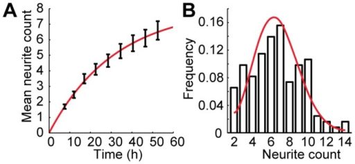Neurite sprouting in developing neurons.A, Mean neurite count as a function of time. The solid line is an exponential fit to the data, constrained to include the origin. Error bars are SE. B, Neurite count distribution at the final measured time point 52.5 h after plating. The solid line is a simulated distribution using the exponential fit from A to calculate the sprouting rate and assumes random neurite sprouting independent of neurite count. Error bars are SE.